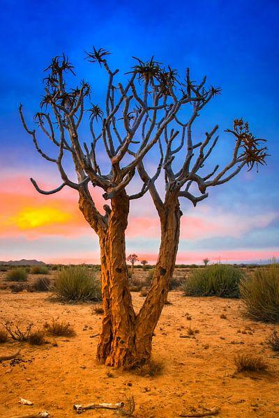 Kokerboom bij zonsopkomst in de Kalahari woestijn, Namibië van Rietje Bulthuis