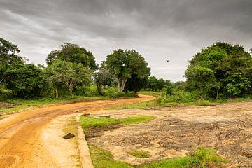 Udawalawe - jungle sri lanka van Nicole Nagtegaal