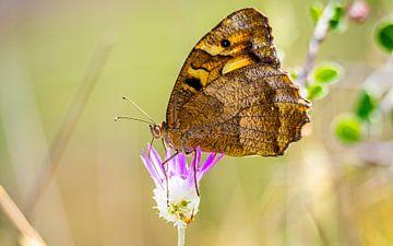 Schmetterling von Stijn Cleynhens