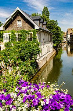 Blumen mit Fassade Fachwerkhaus am Ill im Gerberviertel Frankreich Strassburg von Dieter Walther