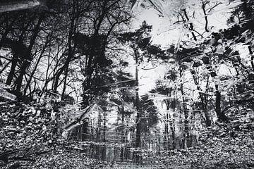 Abstracte zwart-wit foto van bomen in bevroren plas van Paul van Putten