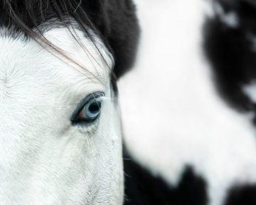 Pferd. von Vincent Willems