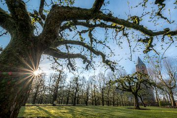 Fruitboomgaard bij kerk van Moetwil en van Dijk - Fotografie