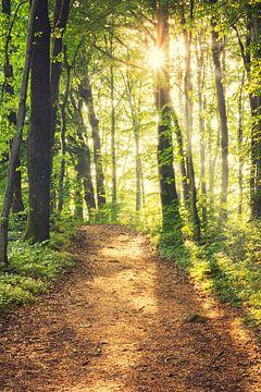 Waldweg zur Sonne von Tobias Luxberg