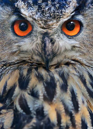 Orange Eyed Eagle Owl von M DH