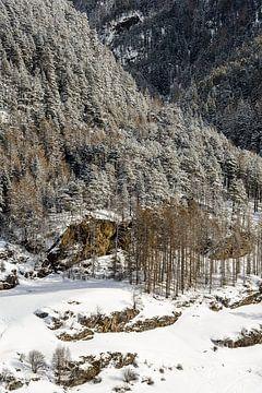 Wald an der Bergwand von Wouter van Woensel