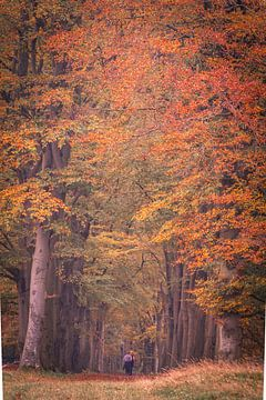 Autumn Avenue in Oosterhesselen sur Anneke Hooijer