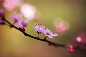 Blüte von Isabel van Veen