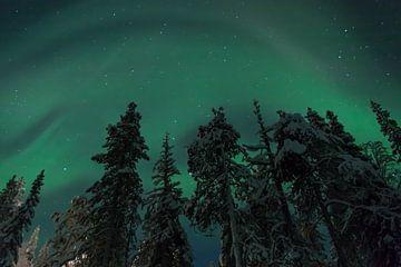 Aurora borealis in Lapland von Kim Claessen