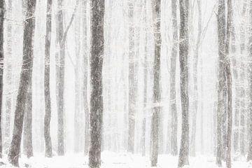 winters Bos van peter reinders