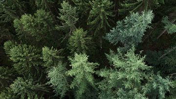 Naaldbomen vanuit de lucht. van Axel Weidner