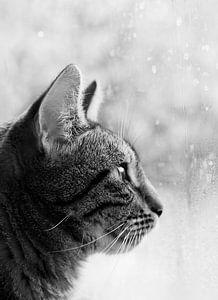 November rain van Helga Novelli