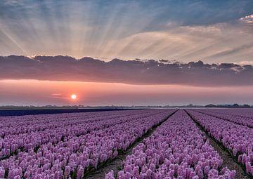 Farben eines frühen Morgens von Judith Veenstra
