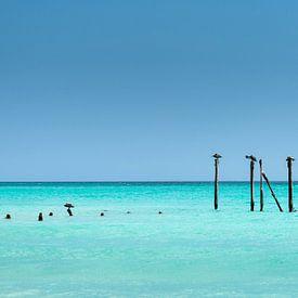Pelikanen rusten op palen aan de kust van Druifbeach (Aruba) van Eus Nieuwenhuizen