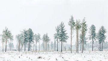 Bomen op de Strabrechtse Heide von Nando Harmsen