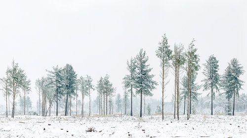 Bomen op de Strabrechtse Heide van