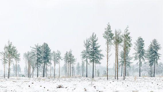 Bomen op de Strabrechtse Heide van Nando Harmsen