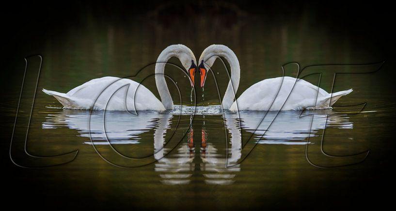 Love van Pieter van Roijen