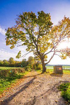 Oude zijweg op een herfstavond von