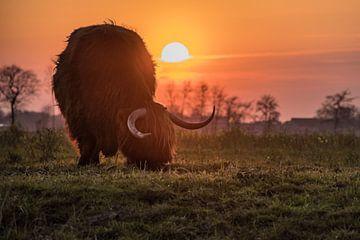 Kuh in der Sonne von Wilco Bos