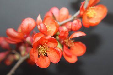 Blütenzierde van Augenblicke im Bild