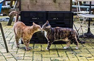 Katten op terras