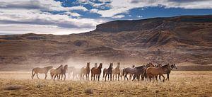 Wilde paarden in Patagonie van Gerard Burgstede