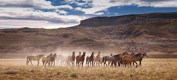 Wilde Pferde in Patagonien von Gerard Burgstede