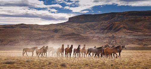 Wilde paarden in Patagonie van