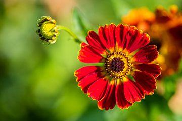 Gloeiende bloemen staan centraal van Matthias Korn