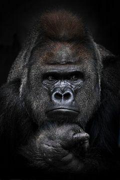 Porträt eines starken männlichen Gorillas, der misstrauisch in die Seite schaut, Faust stützt sein G von Michael Semenov