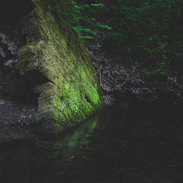 Groen mosachtig gesteente met reflectie in water van Patrik Lovrin