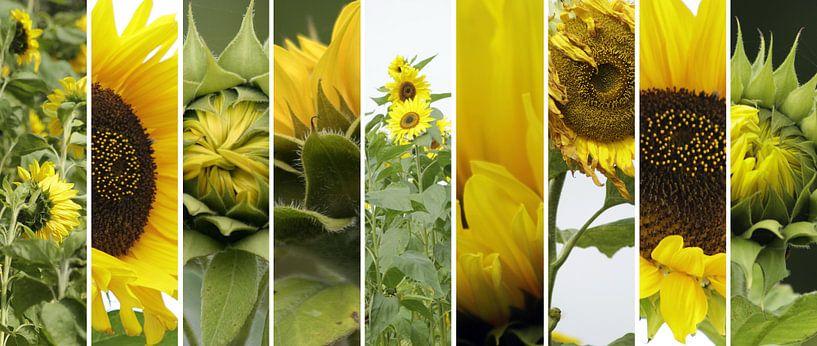 zonnebloem collage van Yvonne Blokland