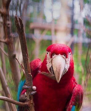Papagei von Peter Mensink