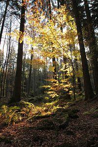 Waldlichter