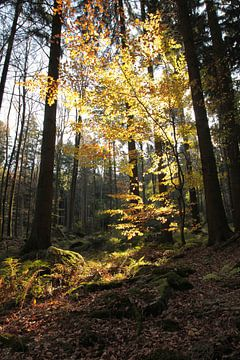 Waldlichter sur Renate Knapp