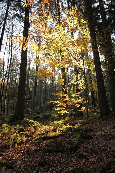 Waldlichter van Renate Knapp