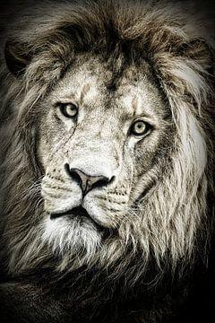 Porträt eines Löwen von Elles Rijsdijk