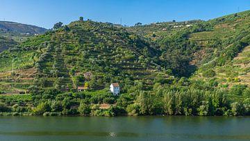 Wijngaarden aan de Douro rivier in Portugal van Jessica Lokker