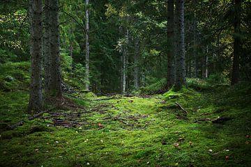 Waldweg von Heike Hultsch
