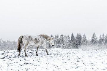 Pale horse van Michel Kant