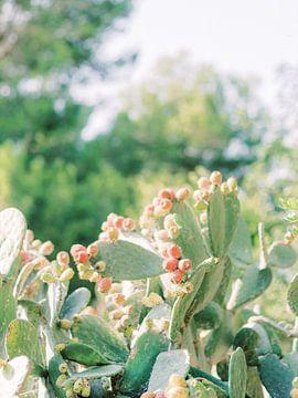 Un cactus avec beaucoup de fruits sur Youri Claessens