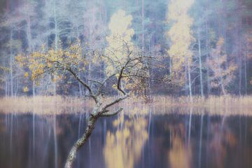 Nebelsee von Marc Hollenberg