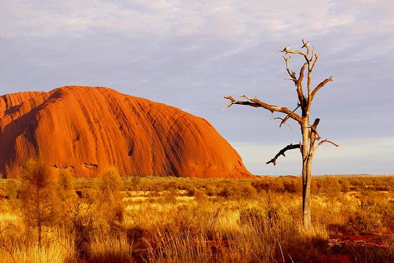 Zonsopgang Uluru - Ayers Rock van Inge Hogenbijl