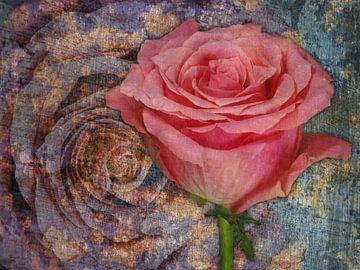 De roos op linnen van Gilbert Gordijn