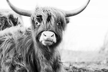 Grappige Schotse hooglander in zwart/wit van Tonny Visser-Vink