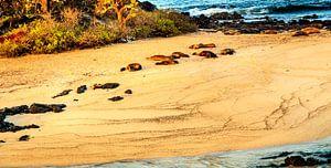 Zeeleeuwen op de Galapagos van