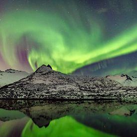 Noorderlicht, poollicht of Aurora Borealis in de nachtelijke hemel boven de Lofoten in Noorwergen van Sjoerd van der Wal