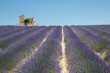 Lavendelfeld mit baufälligem Häuschen von Jolanda van Eek