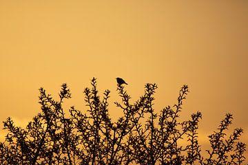 Silhouet van een vogel van Thomas Thiemann